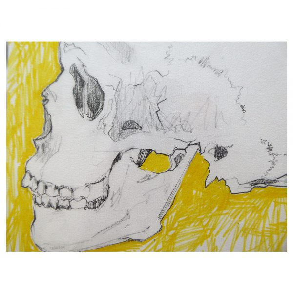 skull_3_cuadro_lapiz_jimena_aragones